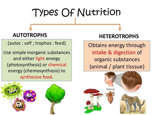 venn diagram of autotrophs and heterotrophs