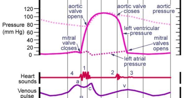 Wiggers Diagram Explanation